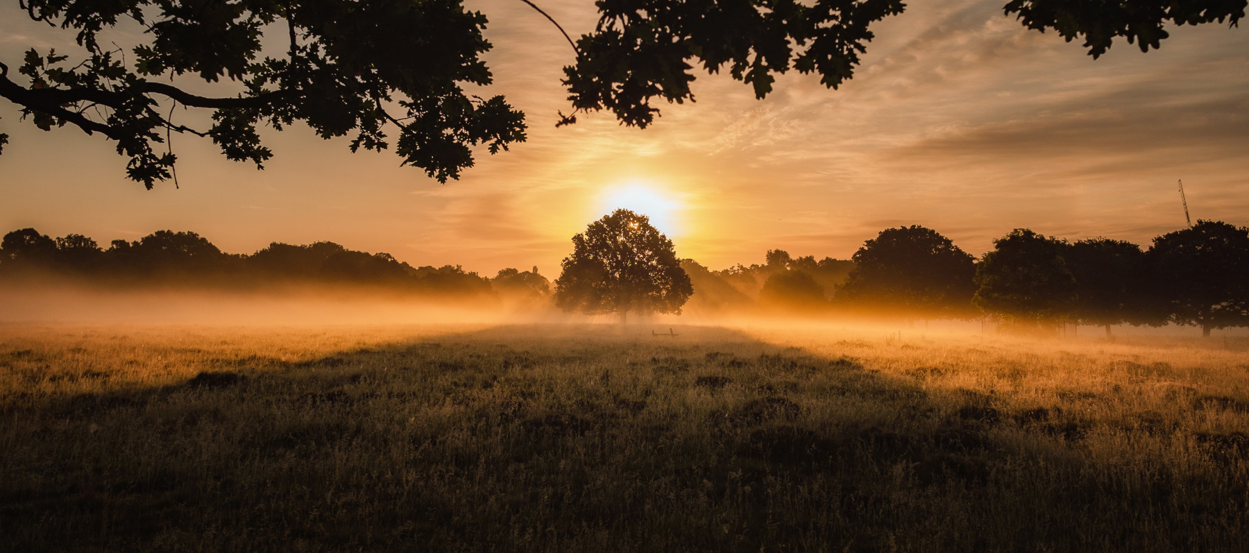 Glowing picture of a tree in a field, early morning